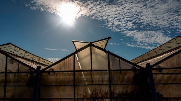 tinted-solar-panel-farms-can-grow-food-generating-electricity